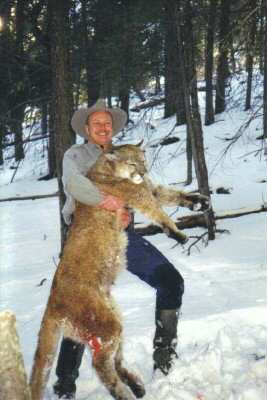 The end of a long mountain lion chase.